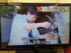 橋元養蜂~テレビに出ました!!~
