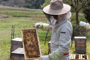 橋元養蜂~はちみつの採れる場所~