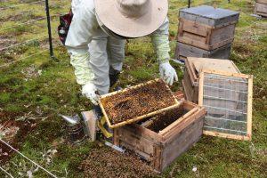 橋元養蜂~どんなはちみつが採れる?~